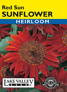 SUNFLOWER RED SUN   HEIRLOOM