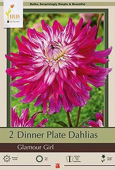 DAHLIA DINNER PLATE GLAMOUR GIRL