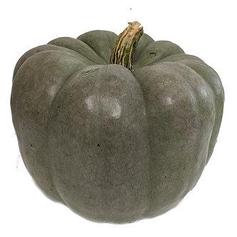 Blue Pumpkin Medium