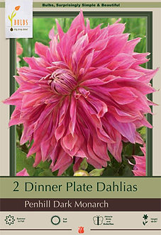 DAHLIA DINNER PLATE PENHILL DARK MONARCH