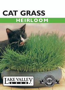 CAT GRASS  HEIRLOOM