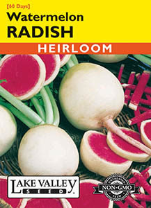 RADISH WATERMELON  HEIRLOOM