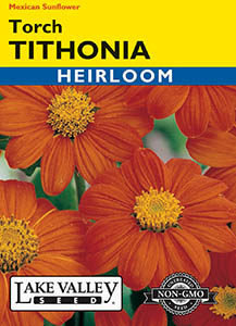 TITHONIA TORCH (MEXICAN SUNFLOWER) HEIRLOOM