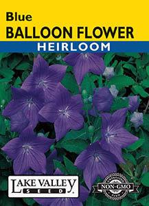 BALLOON FLOWER BLUE HEIRLOOM