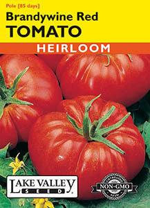 TOMATO POLE BRANDYWINE RED  HEIRLOOM