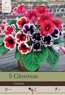 GLOXINIA MIXTURE