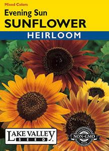 SUNFLOWER EVENING SUN MIXED COLORS  HEIRLOOM