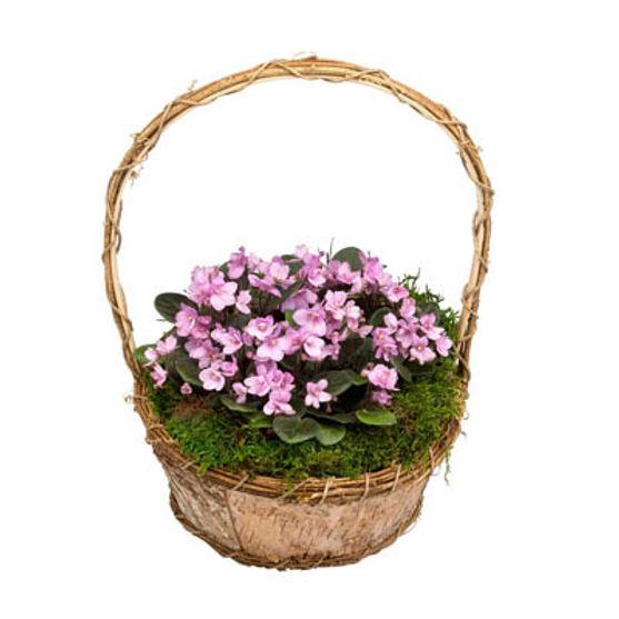African Violet Basket