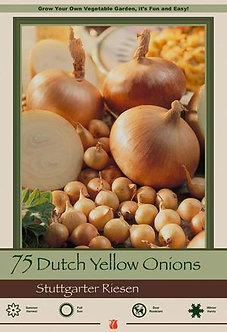 DUTCH ONION STUTTGARTER YELLOW