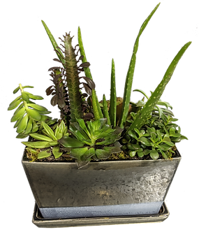 Assortment of Succulents in a Stylish Pot