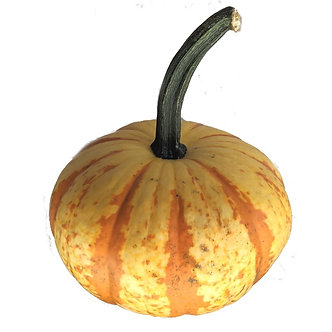 Blaze Miniature Pumpkin