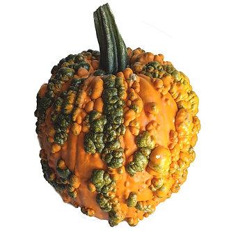 Large Warty Pumpkin