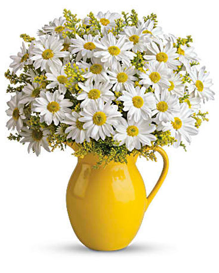 Teleflora's Sunny Day Pitcher of Daisies