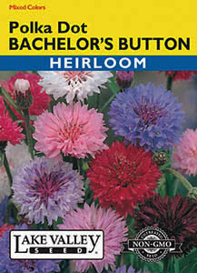 BACHELOR'S BUTTON POLKA DOT MIXED COLORS  HEIRLOOM
