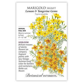Marigold Lemon/Tangerine Gem