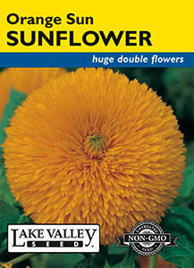 SUNFLOWER ORANGE SUN DOUBLE