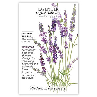 Lavender Tall English Vera