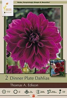 DAHLIA DINNER PLATE THOMAS A EDISON