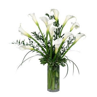Purity (12 White Callas)