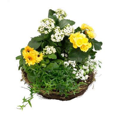 Basket of Flowering Plants