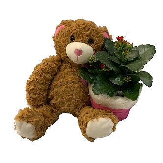 Plush Farrah Bear W/Kalanchoe Plant