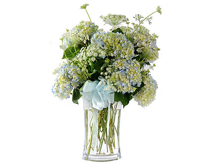 Flower arrangement of white hydrangea tinged with blue in a clear vase