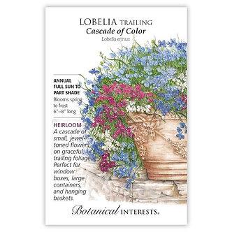 Lobelia Trailing Cascade of Color