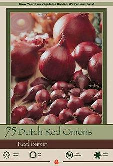 DUTCH ONION RED