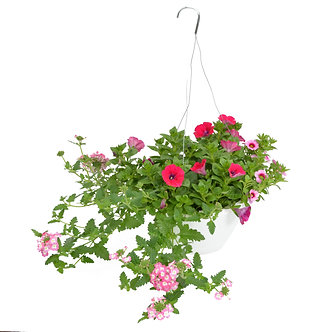 """Hanging Basket 10"""" Verbena, Petunias, Calibrachoa"""