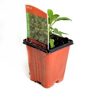 "Sage 4"" Pot"