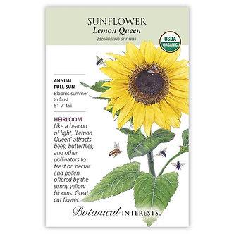 Sunflower Lemon Queen Org