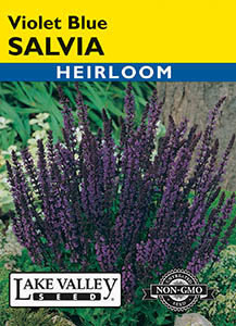 SALVIA VIOLET-BLUE  HEIRLOOM