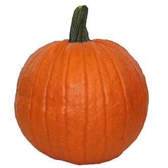 Carving Pumpkin Medium Size