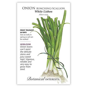 Onion Bunching (white) Lisbon