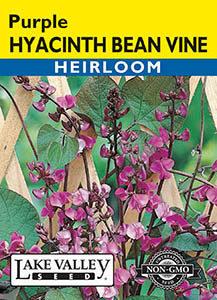 HYACINTH BEAN VINE HEIRLOOM