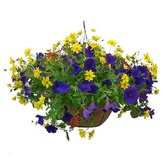 """12"""" Annual Mixed Combo Hanging Basket"""