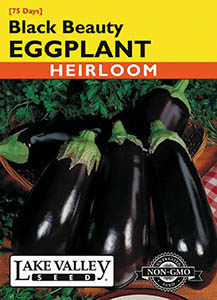 EGGPLANT BLACK BEAUTY  HEIRLOOM