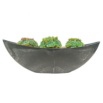 3 Succulents in Pot