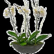 3-stem-orchid-t.png