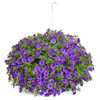 "Hanging Basket 10"" Calibrachoa Assorted Colors"