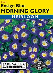 MORNING GLORY ENSIGN BLUE