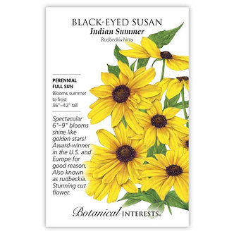 Black-Eyed Susan Indian Summer