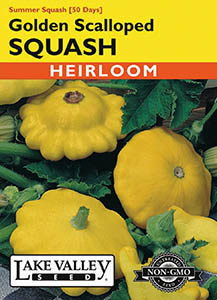 SQUASH SUMMER GOLDEN SCALLOP YELLOW  HEIRLOOM
