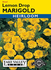 MARIGOLD LEMON DROP HEIRLOOM