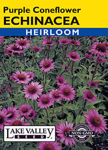 ECHINACEA PURPLE CONEFLOWER   HEIRLOOM