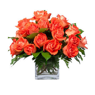 Orange Rose Square (2 Dozen)