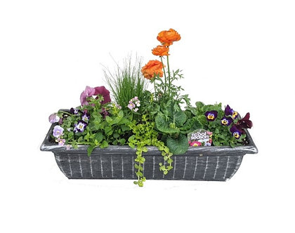 Cool Weather Annual Patio Container Window Box Shape