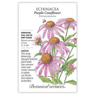 Echinacea Purple Coneflower