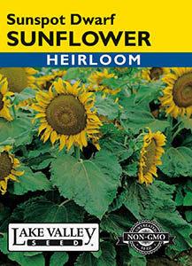 SUNFLOWER SUNSPOT DWARF HEIRLOOM