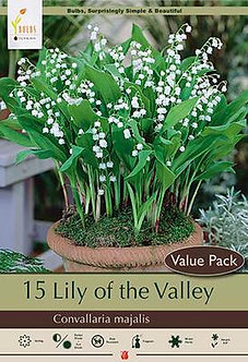 CONVALLARIA MAJALIS LILY OF THE VALLEY IN VP
